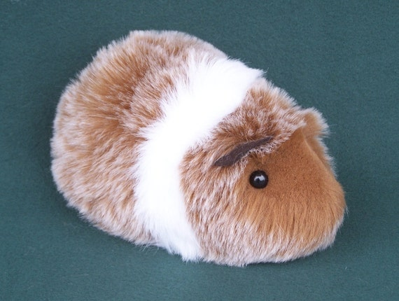 Red and White Guinea Pig