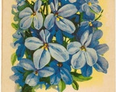 LOBELIA! (Finest Mixed) Vintage Flower Seed Packet Tuckers Seed House Lithograph (Carthage, Missouri)