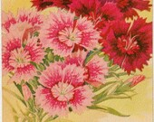 PINKS! (Dianthus Single Finest Mixed) Vintage Flower Seed Packet Tuckers Seed House Lithograph (Carthage, Missouri)