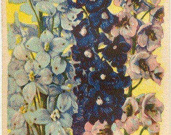 DELPHINIUM! (Finest Mixed) Vintage Flower Seed Packet Tuckers Seed House Lithograph (Carthage, Missouri)
