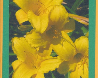 Daylily Collection