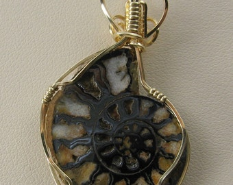 Ammonite Fossil Slice Wire Wrapped Pendant.