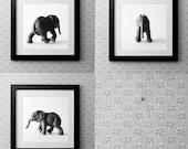 Black and White Elephant Set Prints