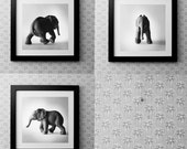 Elephant Collection Prints For pettal0124