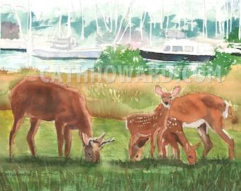 Solomon's Island Deer - watercolor