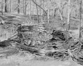 Grey Woods Drawing Reproduction Print- Charcoal Gray- Black and White Landscape- 5x7