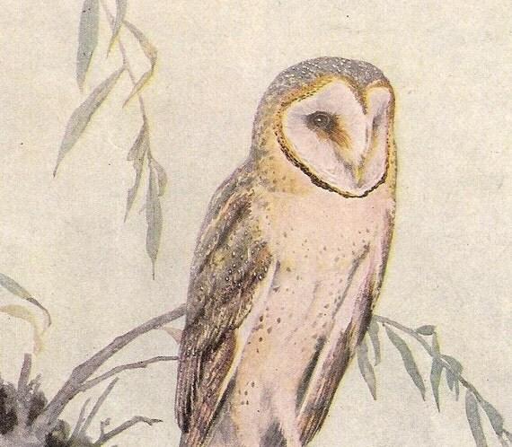 BARN OWL Print  1954
