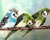 Original 8 x 10  Acrylic Painting of Parakeets  Donna Allen   SALE