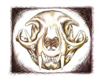Cat Anatomy Art , Cat's Skull, Original drawing, OOAK Ink .