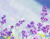 Dreaming Of Lilacs - 5X7 Fine Art Photograph