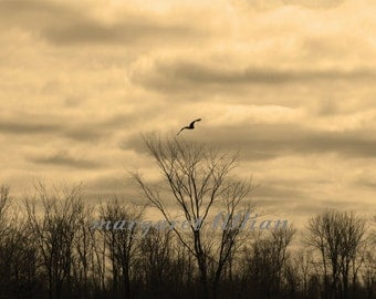 High Flying - 8X10 Fine Art Photograph