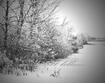 New Snow - 8X10  Fine Art Photograph