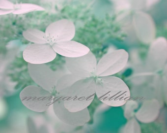Green Hydrangea - 5X7 Fine Art Photograph