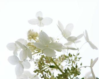 Heavenly Hydrangea - 5X7 Fine Art Photograph - Free Shipping