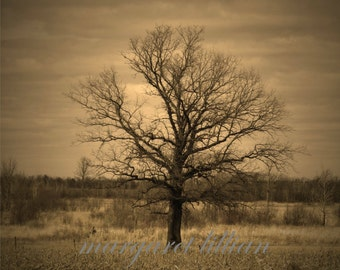 Lonely - 8X12 Fine Art Photograph