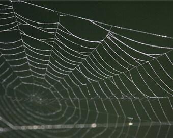 The Web - 8X10 Fine Art Photography