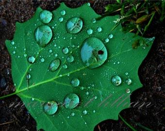Raindrop - 5X7 Fine Art Photograph
