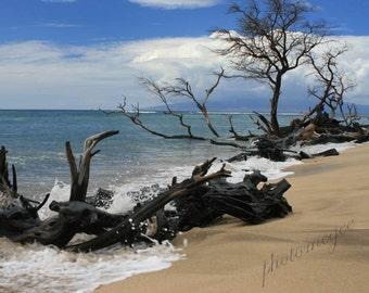 Maui Hawaii Driftwood on Beach