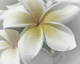 Dreamy Dew - Hawaiian Plumeria