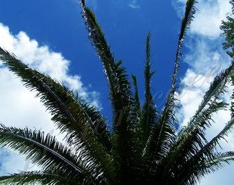 Palm in the Mayan Sky - 5x7 in matte finish