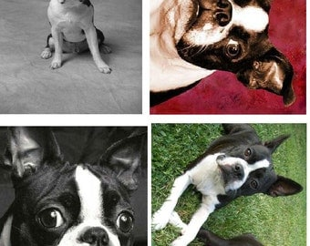 Lot Of 4 Boston Terrier Dog Fabric Panel Quilt Squares
