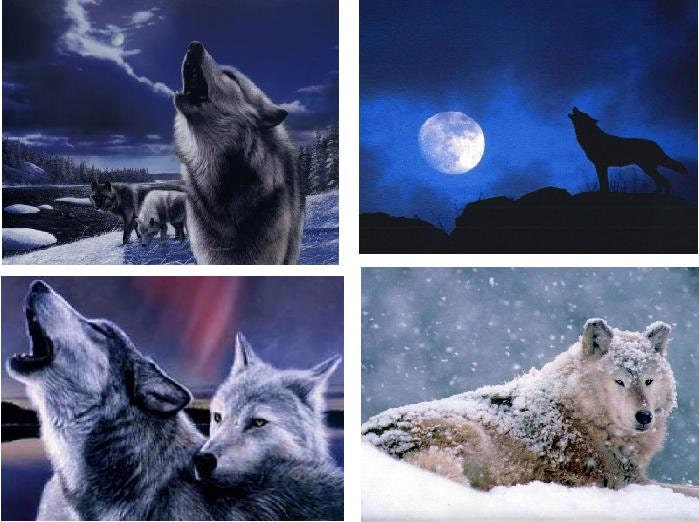 Lot Of 4 Wolves Wolf Fabric Panel Quilt Squares