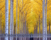 Forest Fire Autumn Seasons Fall Matted Print