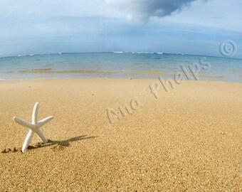 White starfish walking home to the beach. Fine Art Photography.