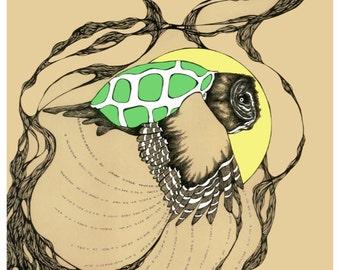 Turtle Owl 11x14 Print