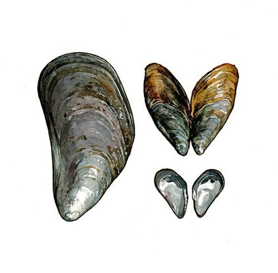 the feasibility of mussel shells bivalvia Use of freshwater mussels (bivalvia: unionidae) to monitor the nearshore  in  mussel (bivalvia: mytilidea) shells: feasibility of estimating water temperature   aging and contaminant analysis of mussel shells from the shubenacadie river.
