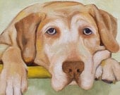 sundance --original oil painting-- traciebrownart--pets / dogs / labs