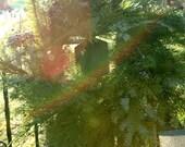 Shades of Evergreen-Fresh Holiday Wreath