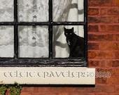 Lancashire Cat - 8 x 10 Original Art Photograph