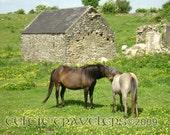 Famine Cottage, Kilmovee, Ireland - Original 8 x 10 Art Photograph
