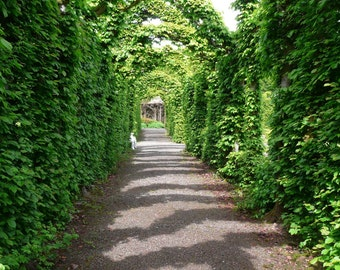 Arched walkway at Birr Castle Formal Gardens  8 x 10 Original Art Photograph