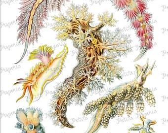 Haeckel Sea Life Digital Download Collage Sheet S