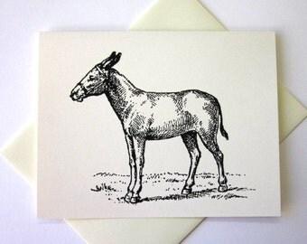 Donkey Burro Note Cards Stationery Set of 10 Cards