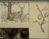 m3 Shadow Box Art - Nature's Treasures - Buckeye