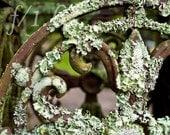 Lichen and fleur de lis scroll fine art photo