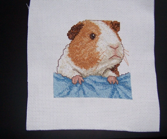 PEEPING GUINEA PIG cross stitch picture FREE Shipping