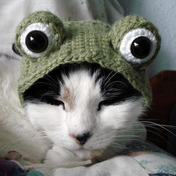 pet hat - frog