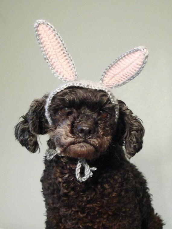 pet hat - rabbit