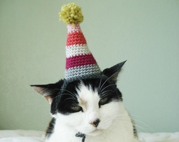pet hat - party