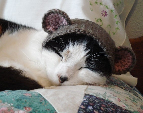 pet hat - bear