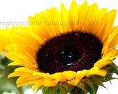 Sunflower Glory fine art print