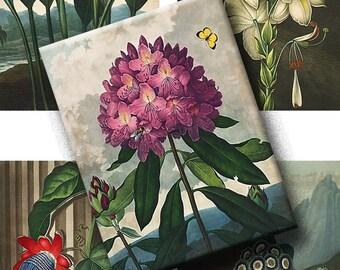 Digital Collage Sheets Vintage Botanical Floral Prints - Clipart, Illustrations and Labels