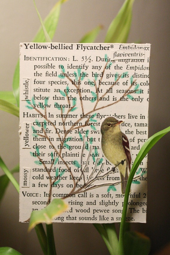 Yellow-bellied Flycatcher- ACEO Original Mixed-Media Collage