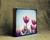 Tulip memories - Photo Block