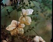 Floral Lace - 8x8  Fine Art Print