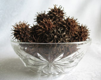 Sweetgum tree seed pods